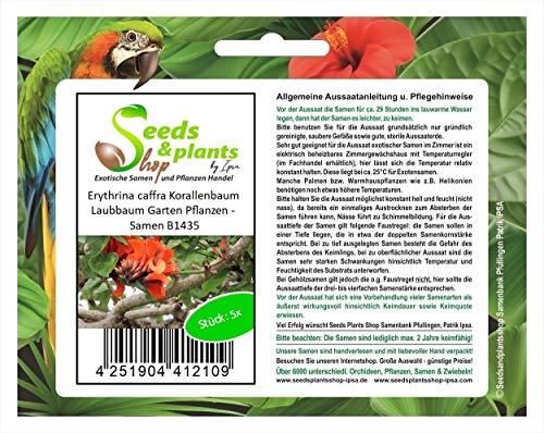 Stk - 5x Erythrina caffra Korallenbaum Laubbaum Garten Pflanzen - Samen B1435 - Seeds Plants Shop Samenbank Pfullingen Patrik Ipsa