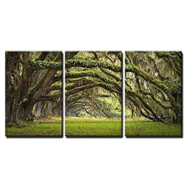 wall26 - 3 Piece Canvas Wall Art - Oaks Avenue Charleston SC plantation Live Oak trees forest landscape - Modern Home Decor Stretched and Framed Ready to Hang - 24 x36 x3 Panels