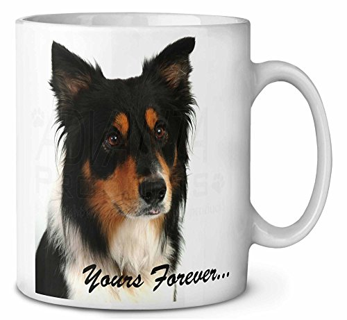 Tri-color Border Collie Dog \