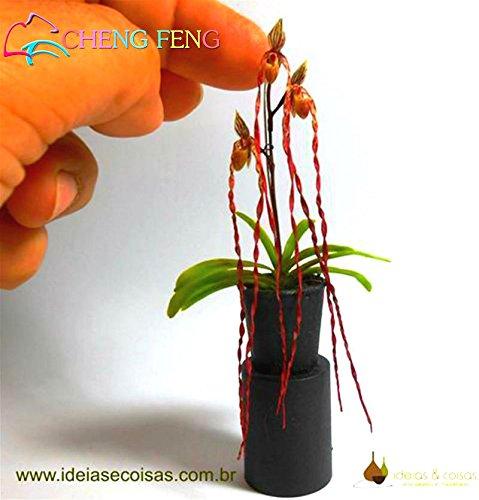 100 Pcs Mini Bonsai Orchid Graines d'intérieur Accueil miniature Plantes Fleurs graines Pot de jardin plante Diy SEMENTES 2016 Rare Fleurs Cadeau Violet