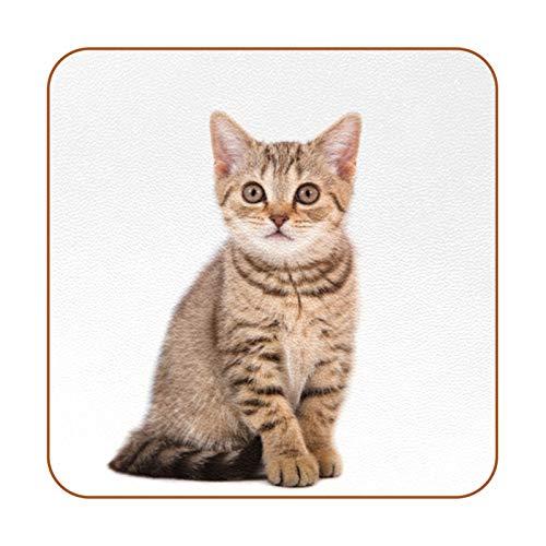 Juego de 6 posavasos con diseño de gato solitario para bebidas. Regalo de inauguración de la casa.