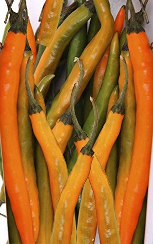 Seedeo Peperoni Turuncu Spiral (capsicum annuum) 30 Samen