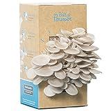 Kit culture de champignons - Pleurotes gris - Bio et Français - Dans votre cuisine en 10 jours
