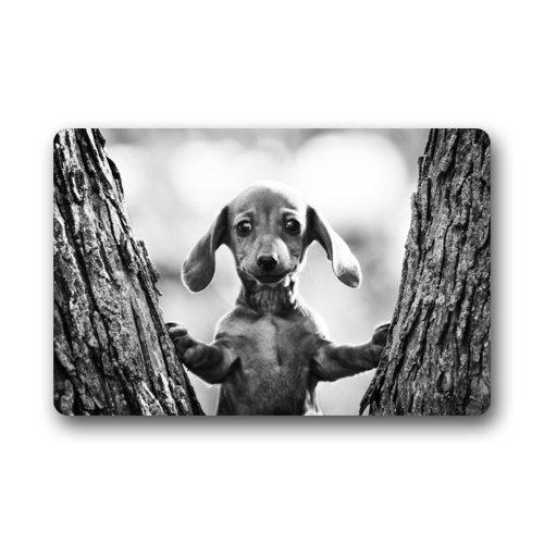 Ms Right Dachshund doormats Moda Cute bebé Perro Salchicha Gris Imagen Felpudo–Secado rápido Puerta Mat