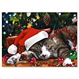 Picture This Christmas Cat Christmas Cards - Set of 18, Themed Holiday Card, Large 5 x 7 Inch Size, Envelopes Included