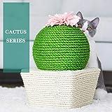 Interessante gatto Pet bordo Scratching giocattolo- Creativo raschietto Cat cactus con divertenti palla, sisal palla cactus forma gatto raschietto con fiori ed erba gatto, giocattolo interattivo for i