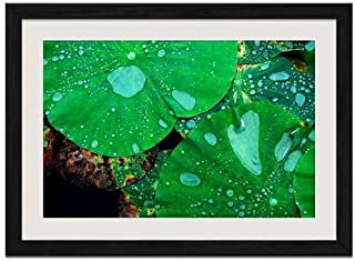 Beautiful Lotus Plant - Art Print Wall Black Wood Grain Framed Picture(16x12inch)