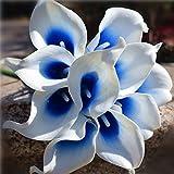 ShineBear Picasso Calla Lilies Royal Blue Bouquet Callas Flowers for Bridal Bridesmaids Bouquets Wedding Centerpieces Corsage DIY Flowers