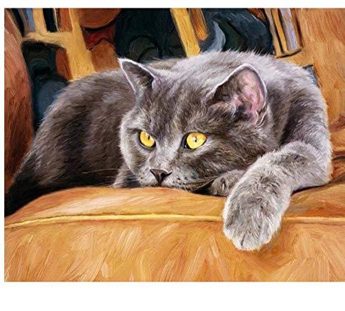 Nobranded Pintar por Numeros para Adultos Niños Sofá Gato Tarde Animal Pintura por Números con Pinceles Y Pinturas Decoraciones 40X50Cm