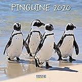 Pinguine - Broschur Kalender 2020 - Korsch-Verlag - Kalender mit Platz zum Eintragen - offen 30 cm x 60 cm