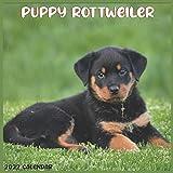 Rottweiler Puppy 2022 Calendar: Official Rottweiler Dog breed Calendar 2022, 16 Months