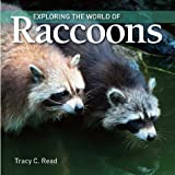 Exploring the World of Raccoons