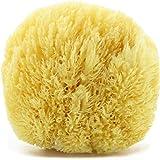 tom&pat® Esponja natural Grass – Esponja de baño del mar Mediterráneo – Empaquetado sin plástico – Primera calidad (13-14 cm)