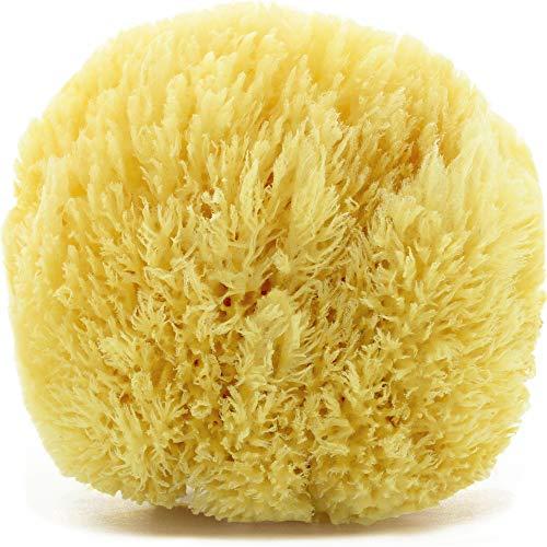 tom&pat Esponja natural Grass, esponja baño extremadamente suave del mar Mediterráneo, para espuma extra, hipoalergénica, esponja vegetal de primera calidad, envases sin plástico (13-14 cm)