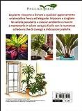 Zoom IMG-1 piante in casa scelta cura