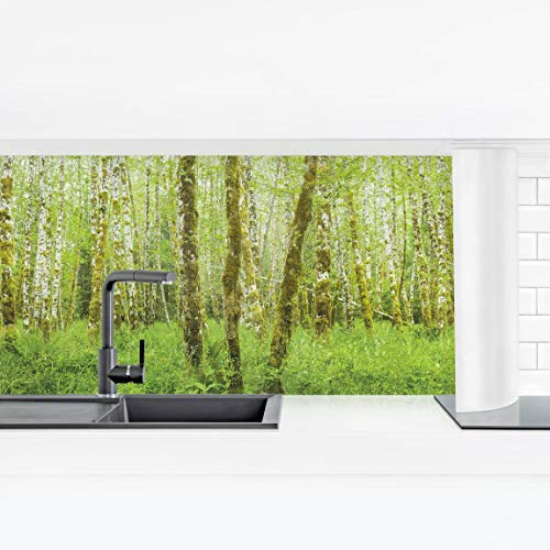 Bilderwelten Crédence adhésive - HOH Ra Forest Olympic National Park 100 x 350 cm Premium
