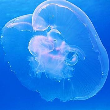 Meechy's Blue Shell