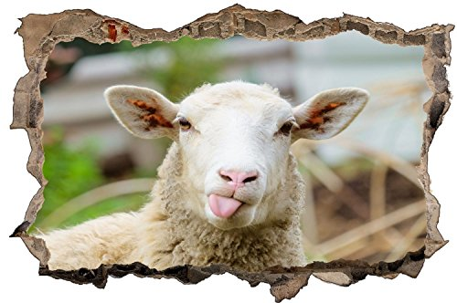 Schaf Tier Wolle Wandtattoo Wandsticker Wandaufkleber D1307 Größe 40 cm x 60 cm