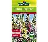 Dehner Blumen-Saatgut, Riesen-Fingerhut, 'Mischung', 5er pack (5 x 0.8 g)