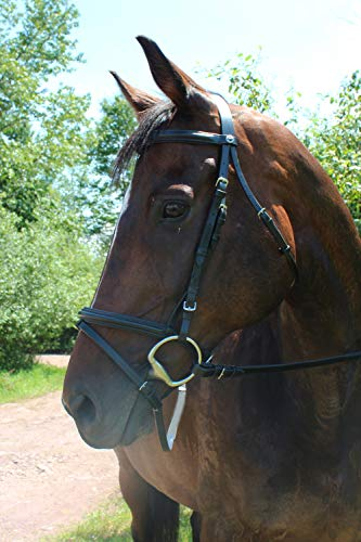 Henri de Rivel Padded Dressage Bridle with Flash and Web Reins