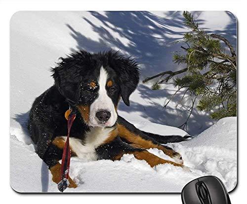 Gaming-Mauspads, Mauspad, Berner Sennenhund Berner Berner Sennenhund
