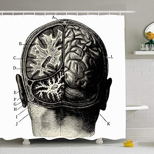 N/A Cortina de Ducha de 72x182.88 cm Steampunk Humain Brain Vintage Grabado Humano Manuel Retro Head Anatomía Ciencia Enfermedad Tejido de poliéster Impermeable Juego de Cortinas de baño con Ganchos