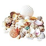 INDRAH Sea Shells Mixed Beach Seashells, 80-90pcs Various Sizes up to 2' Seashells