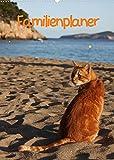 Familienplaner Katzen (Wandkalender 2022 DIN A2 hoch)