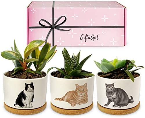 GIFTGIRL Cat Gifts for Cat Lovers Crazy Cat Lady Gifts or Cat Themed Gifts Like Our Cat Planters product image