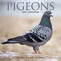 Pigeons 2021 Wall Calendar