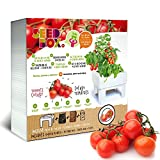 SeedBox SBCUTC - Huerto Urbano de Tomates Cherry