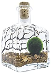 Includes one nano marimo Moss ball, a Square 7oz bottle with cork, Sea fan, and river stones. The cork lid makes this a great piece for retro, country, and vintage decoration schemes. Great Decorations for your home, office, or patio! Extremely easy ...