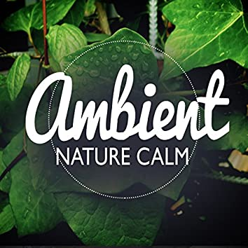 Ambient Nature Calm