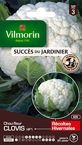Vilmorin 3353543 Pack de Graines Chou-Fleur Clovis HF1 Création