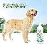 AniForte pflanzliches Neemöl Shampoo 400 ml Hundeshampoo parfümfrei – Naturprodukt für Hunde - 3