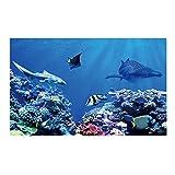 Balacoo - Fondo Daquarium - 40 x 80 cm - Fondo de depósito de peces decorativo - Tela de fondo autoadhesivo de Daquarium
