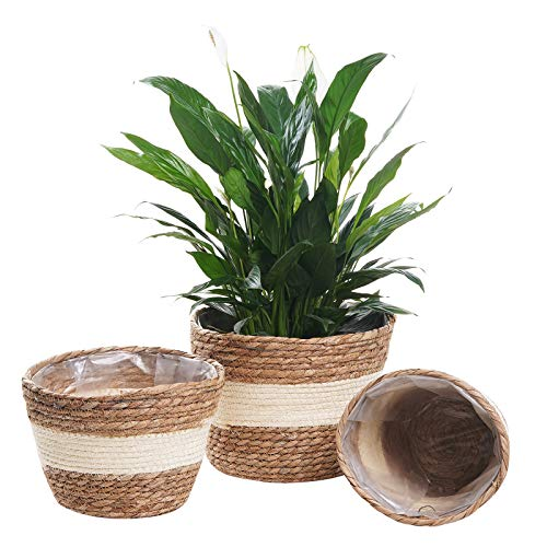LOCONHA Seagrass Planter Basket, 7.5/8.5/10 Inch Flower Pots for Live Plants Indoor Outdoor, Plant Containers (3Pack) (Beige)
