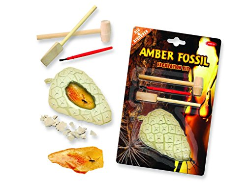 Amber Fossil Dig - Find the insects within the plaster!