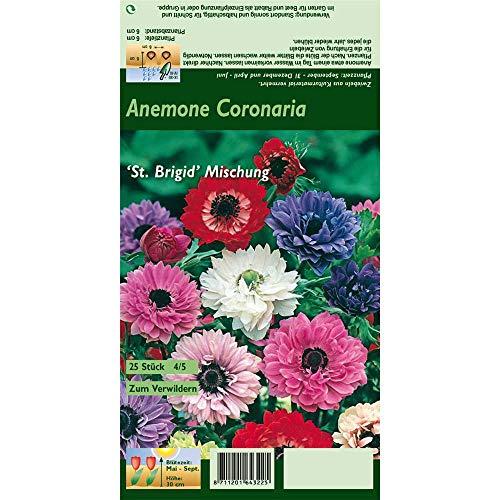 Florado 25x Anemonen Blumenzwiebeln 'St Brigid', Anemone, Zwiebeln Zwiebelblumen, Garten, Blumen Schnittblumen, Bienen Insekten, Größe 4/5