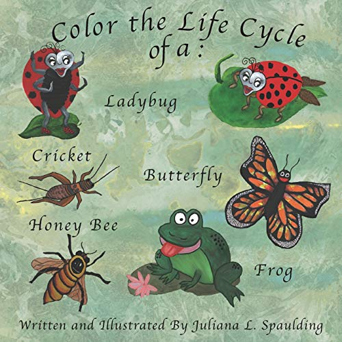 Color the Life Cycle of a Ladybug, Cricket, Butterfly, Honey Bee, and a Frog