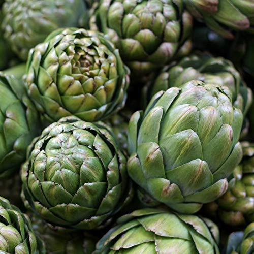 Samen für ca. 10 Pflanzen Green Globe Artischocke - große Blütenköpfe, bis 2m