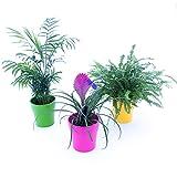 tris piante purifica aria: chamaedorea, tillandsia cianea, felce boston in vasi ceramica, 3 piante depura aria, piante vere
