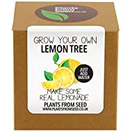 Plants Seed Grow Lemon Plant