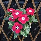 HONIC 50pcs Pervinca Bonsai perenne Pianta in Vaso per Interni pianta Facile Crescere in vasi Bonsai pianta del Fiore per Il Giardino Domestico: 50pcs Rosa Rossa