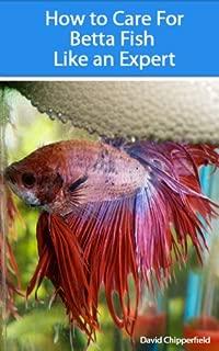 betta fish expert