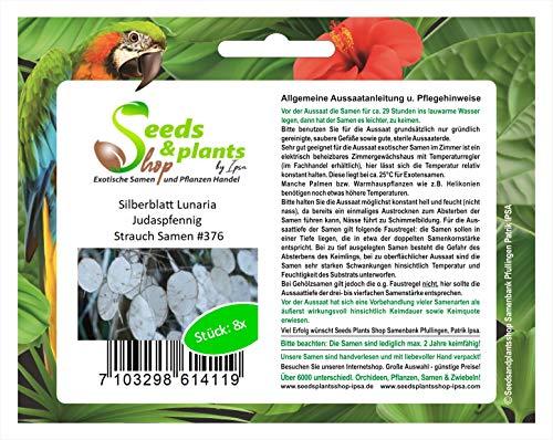 Stk - 8x Silberblatt Lunaria Judaspfennig Strauch Pflanzen - Samen #376 - Seeds Plants Shop Samenbank Pfullingen Patrik Ipsa