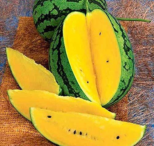 Melone - Wassermelone Tendergold Willhites - Goldene Melone - 10 Samen