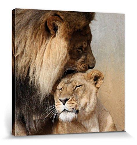1art1 Grandes Felinos - Leones Cariñosos Cuadro, Lienzo Montado sobre Bastidor (40 x 40cm)