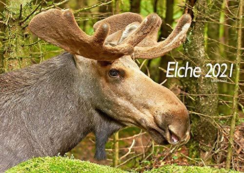Edition Seidel Elche Premium Kalender 2021 DIN A3 Wandkalender Waldtiere Wildtiere Skandinavien