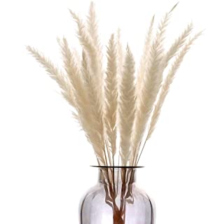 HUAESIN 30Pcs Pampas Secas Grass Flores Secas Naturales Blancos Pampas Phragmites Tallos Flores Secas Decoracion para Jarrones Hogar Mesa Fiesta Balcon Exteriores e Interiores